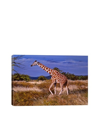 Reticulated Giraffe by Pip McFarry Giclée on Canvas