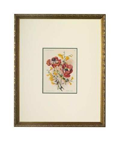 1920 Les Fleurs a l'Aquarelle AnemonesAs You See