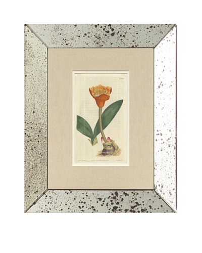1813 Antique Hand Colored Orange Botanical, Mirror Frame