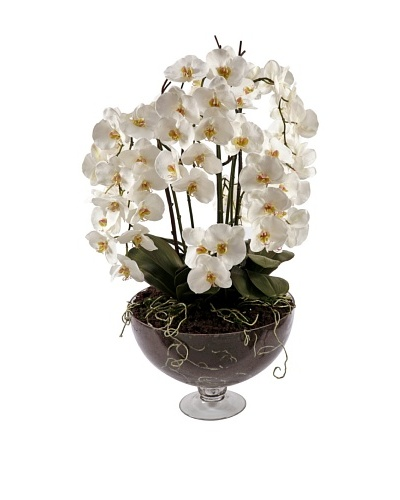 40 Orchid Phalaenopsis in Glass Vase