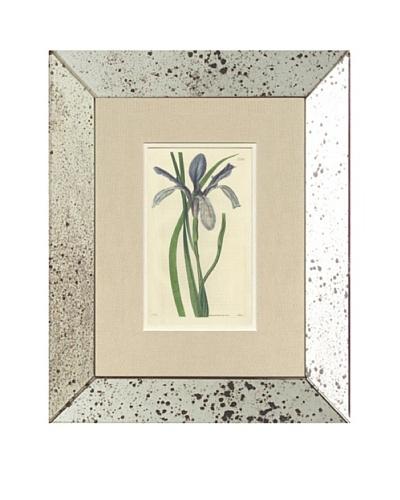 1824 Antique Hand Colored Lavender Botanical, Mirror Frame