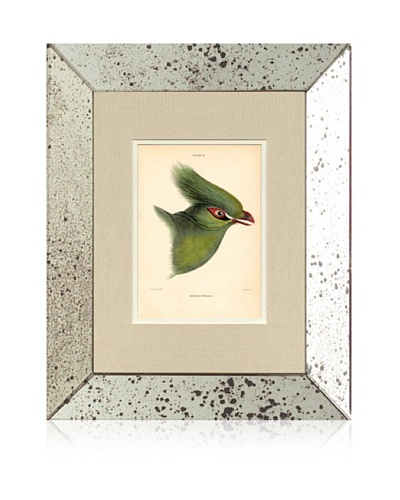 1854 Mirror Frame Bird Print I