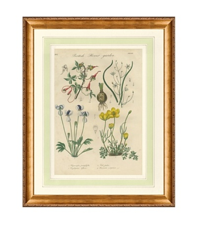 1837 Antique Hand Colored White Botanical Print II, French Mat