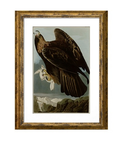 Audubon Golden Eagle