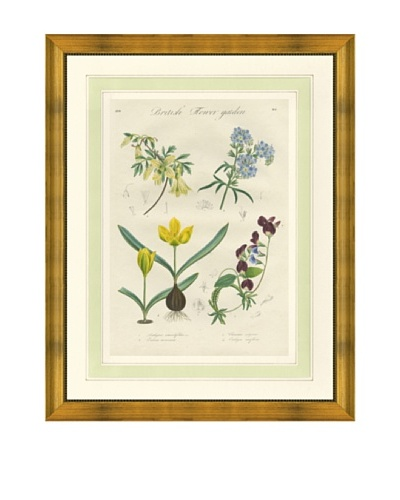 1837 Antique Hand Colored Yellow Botanical Print VI, French Mat