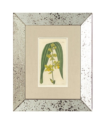1813 Antique Hand Colored Pink Botanical VII, Mirror Frame