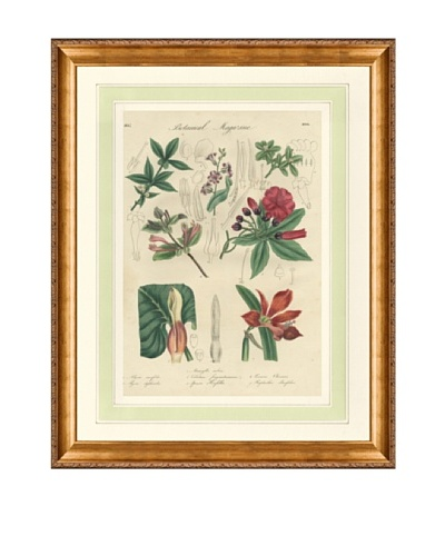 1837 Antique Hand Colored Pink Botanical Print VIII, French Mat