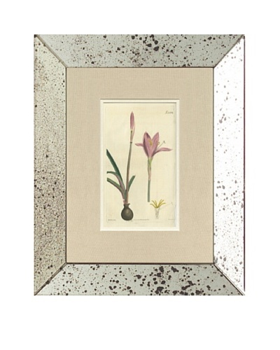 1825 Antique Hand Colored Pink Botanical II, Mirror Frame