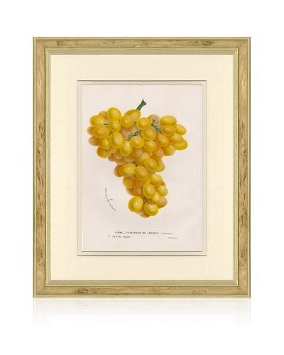 Antique Grapes Print, 1873