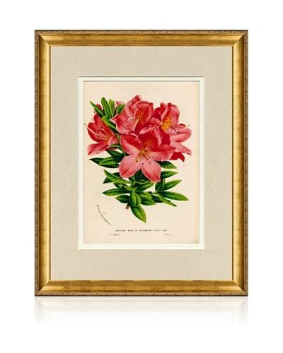 1873 Antique Botanical Print I, Ornate Gold