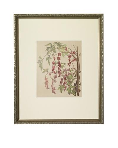 1903 Bleeding Heart Botanical ChromolithographAs You See