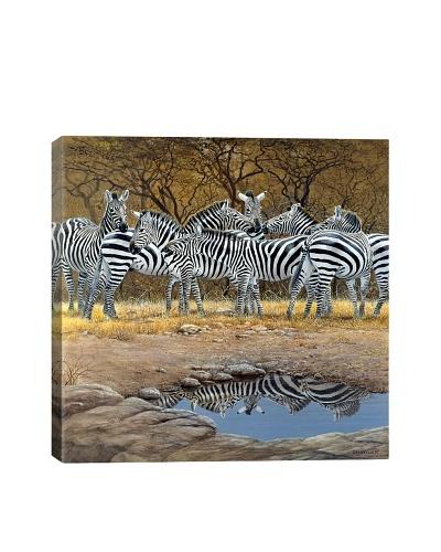 Zebras by Harro Maass Giclée on Canvas