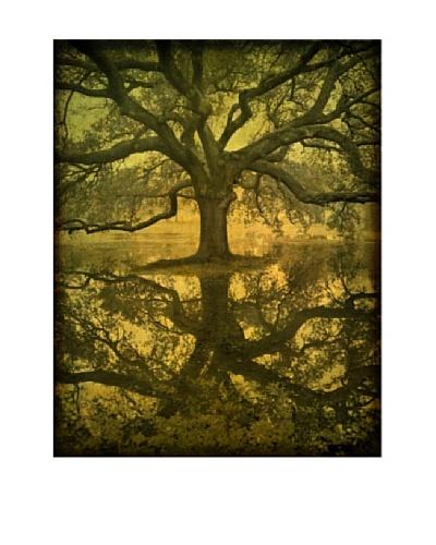 "Moises Levy ""Audubon Oak Reflection"""