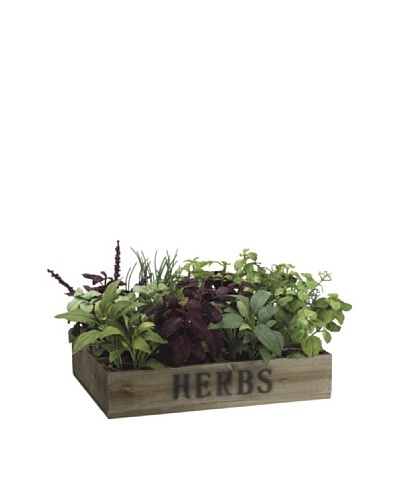 Allstate Floral Herb Garden in Clay Pot & Wood Box