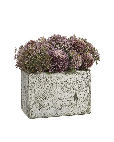 Allstate Floral Allium & Starflower in Tall Cement Container