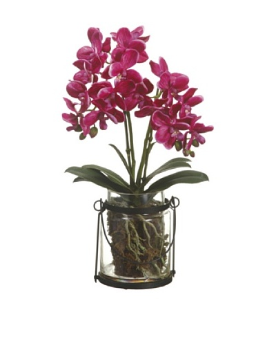 Allstate Floral Phalaenopsis Orchid Plant in Glass Vase, Orchid