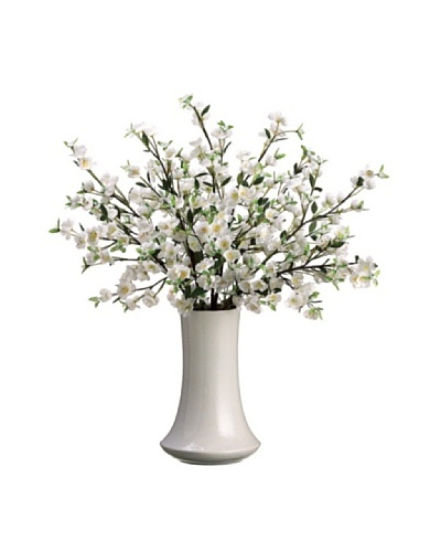 Apple Blossom Plant, White