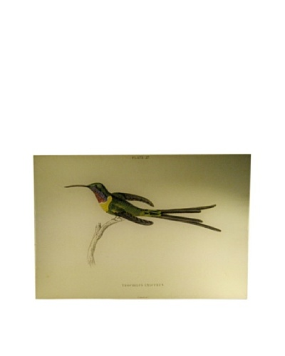 Twigs and Moss Hummingbirds Plate 27 Glass Tray