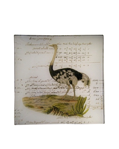 Twigs and Moss African Series Ostrich Glass Tray