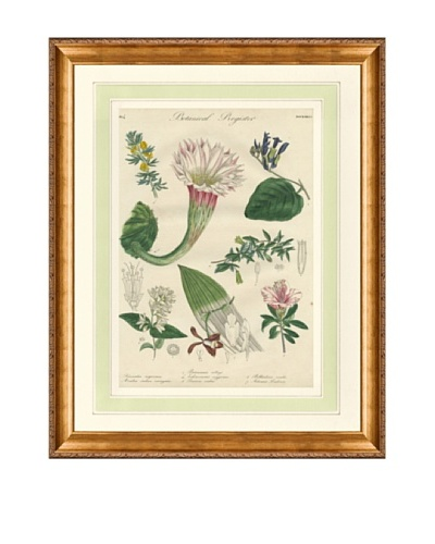 1837 Antique Hand Colored White Botanical Print, French Mat