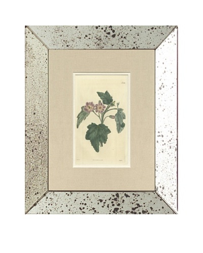 1825 Antique Hand Colored Purple Botanical II, Mirror Frame