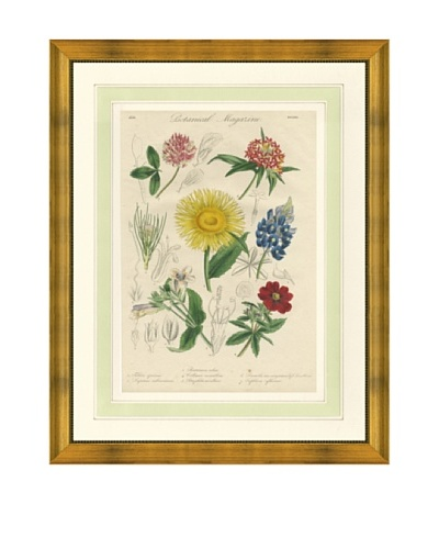 1837 Antique Hand Colored Yellow Botanical Print X, French Mat