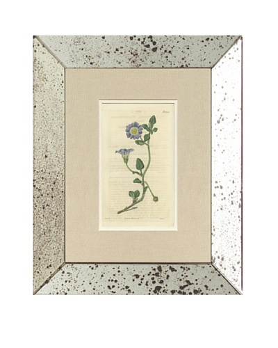 1825 Antique Hand Colored Lavender Botanical, Mirror Frame
