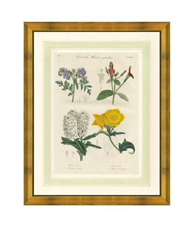 1837 Antique Hand Colored Yellow Botanical Print, French Mat