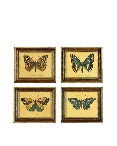 Set of 4 Framed Reproduction Entomological Prints