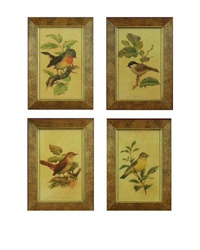 Set of 4 Framed Reproduction Ornithological Prints