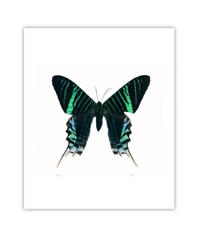 Art Addiction Acrylic Printed Blue Green Butterfly
