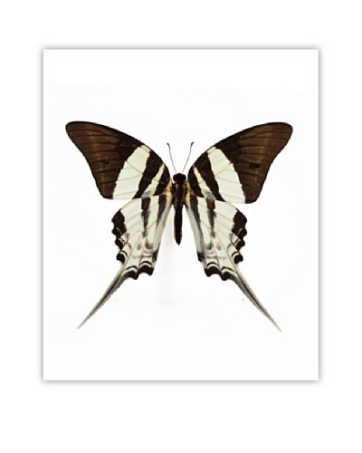 Art Addiction Acrylic Printed Beige Butterfly
