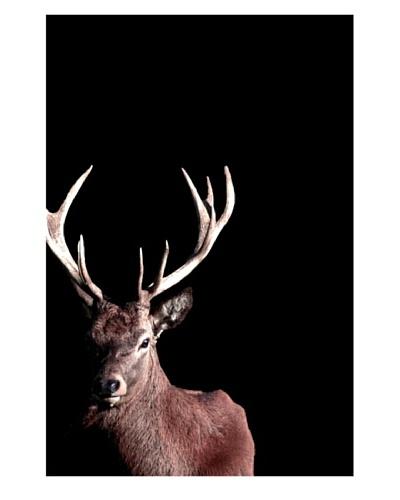Art Addiction Deer I 36 x 24 Acrylic Panel
