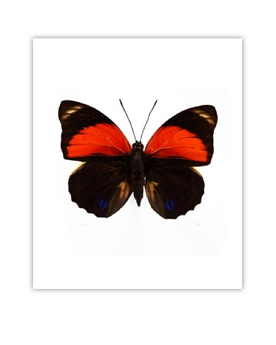 Art Addiction Acrylic Printed Red Butterfly
