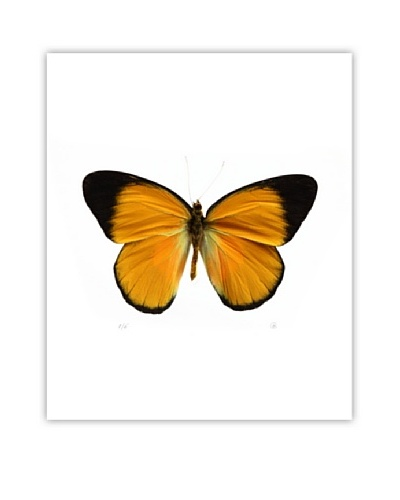 Art Addiction Acrylic Printed Mustard Butterfly