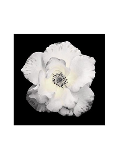 Art Addiction White Floral On Black VIII Artwork on Acrylic