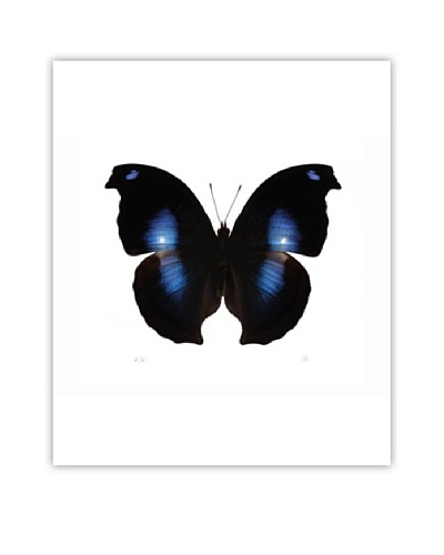 Art Addiction Acrylic Printed Black & Blue Butterfly