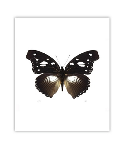 Art Addiction Acrylic Printed Brown Butterfly