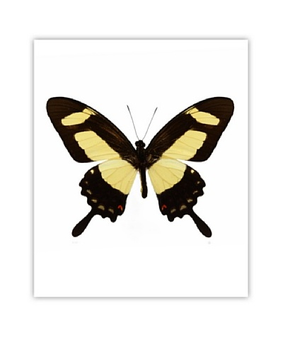 Art Addiction Acrylic Printed Yellow Butterfly II