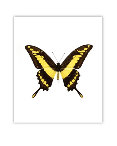 Art Addiction Acrylic Printed Yellow Butterfly I