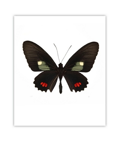 Art Addiction Acrylic Printed Black & Red Butterfly
