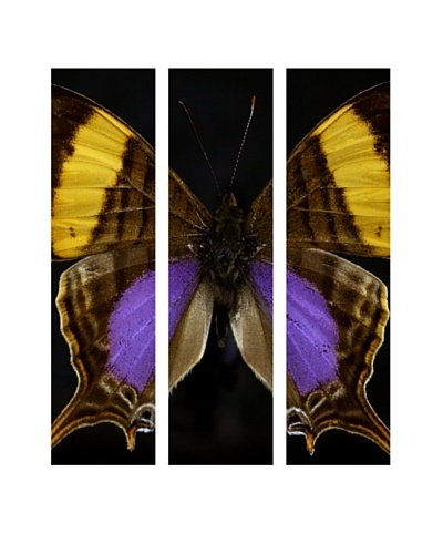 Art Addiction Acrylic Printed Butterfly Set III, Triptych