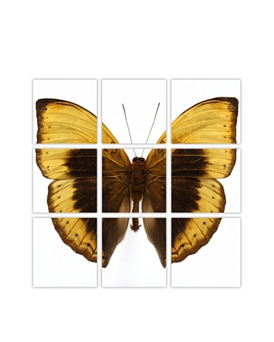 Art Addiction Acrylic Printed Yellow Butterfly, Polyptych