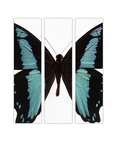 Art Addiction Acrylic Printed Butterfly Set I, Triptych