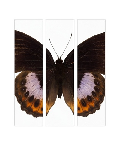 Art Addiction Acrylic Printed Butterfly Set II, Triptych
