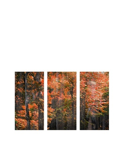 Art Addiction Acrylic Printed Trees, Triptych