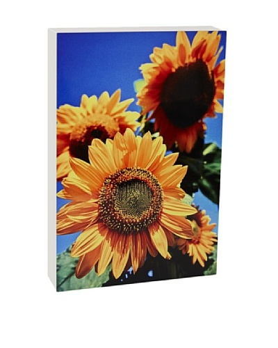 Art Block Sunflowers Fine Art Photography on Metal