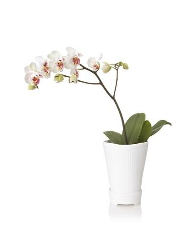 Barreveld International Fine Bone China Planter with Plate, White