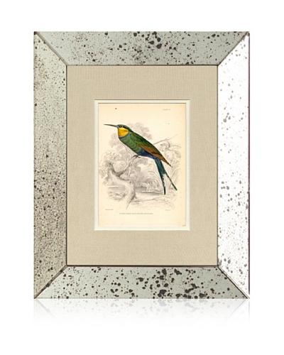 1854 Mirror Frame Bird Print IV