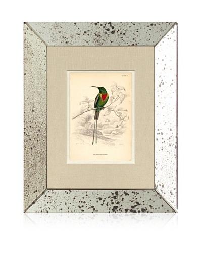 1854 Mirror Frame Bird Print V
